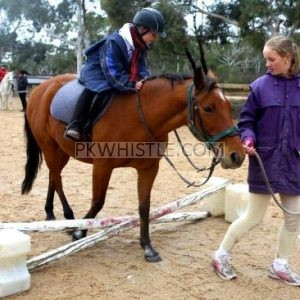 Horse Riding Now In Perth
